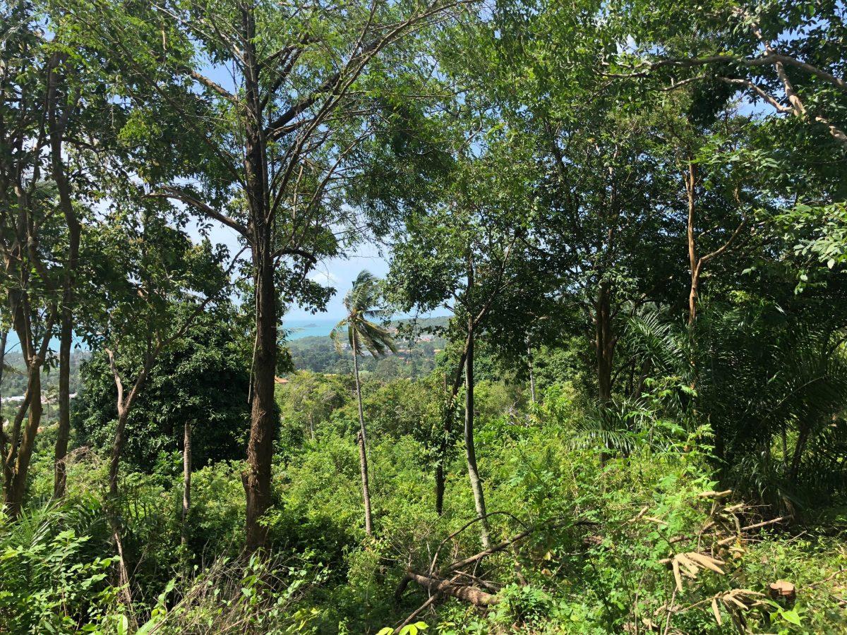21-rai-of-sea-view-land-in-bo-phut-koh-samui-for-sale