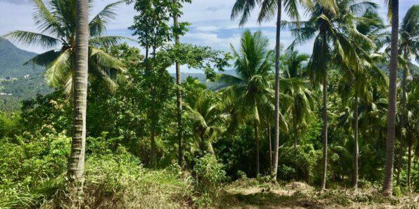 Land Mae Nam for Sale Koh Samui