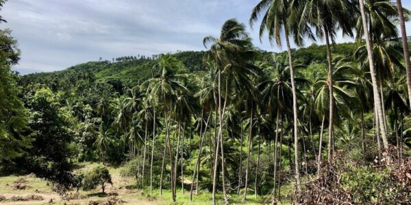 Land Mae Nam Koh Samui