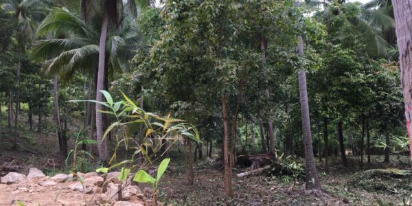 1.75 Rai Property - Chaweng Noi, Koh Samui - For Sale