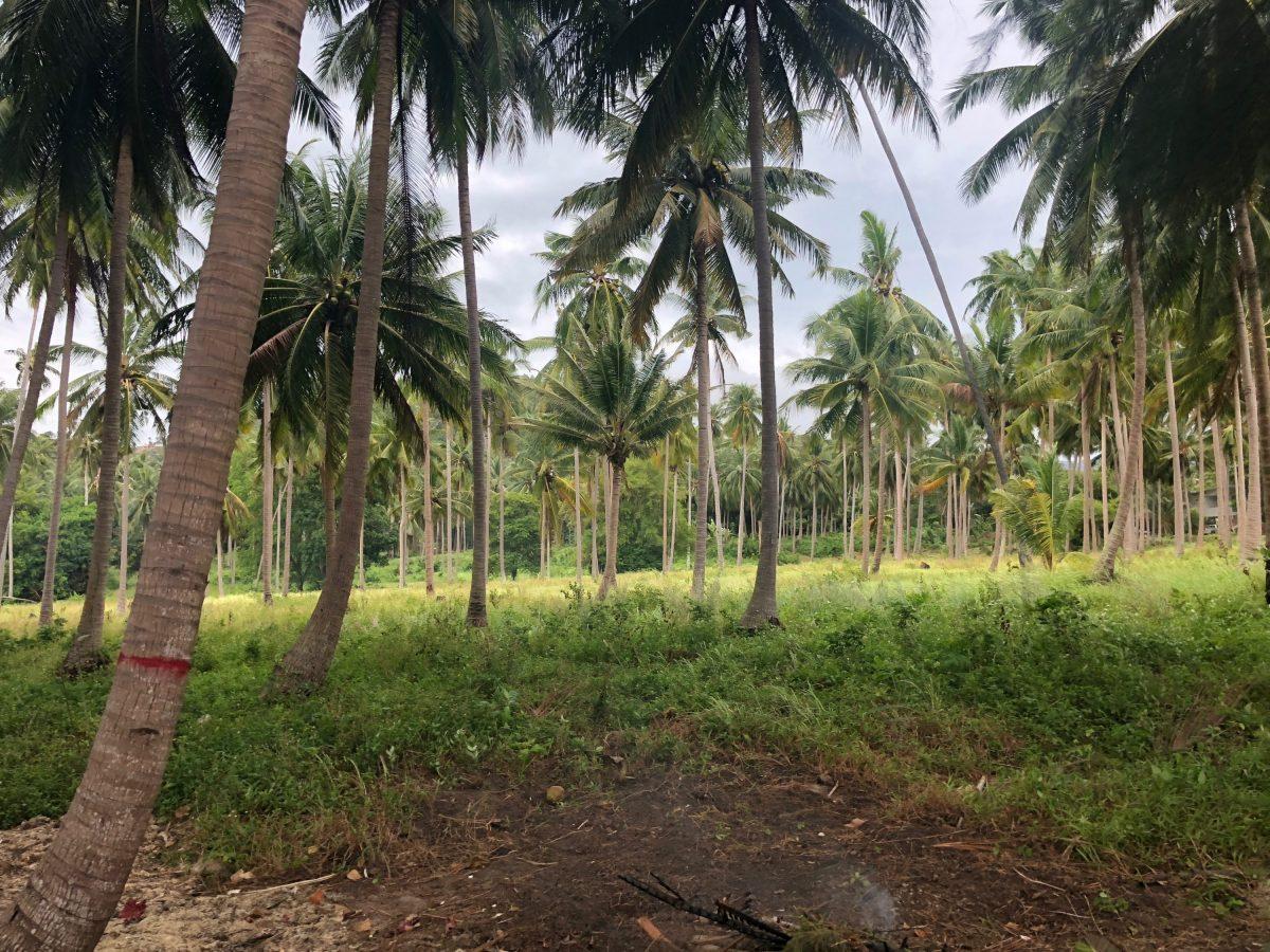 Amazing Beachfront Land 27 Rai Bang Makham For Sale