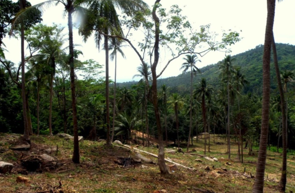 10.5 Rai Sea View Land - Hin Lad, Koh Samui - For Sale - Doctor Property Real Estate
