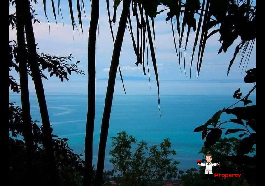 7 Rai Sea View Land - Bang Por - Koh Samui - for sale 2